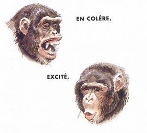 chimpanze_langage