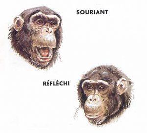 chimpanze_langage02